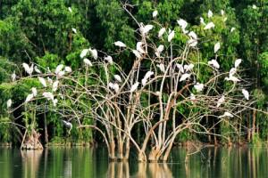 Thiên nhiên tươi đẹp vùng đất Ninh Bình